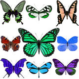 Colorful butterflies Stock Photos