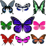 Colorful butterflies Royalty Free Stock Photo