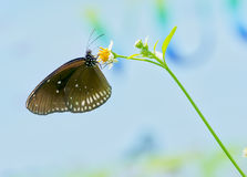 Colorful butterflies on the flowers Royalty Free Stock Images