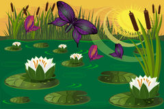 Colorful butterflies fly over the lilies in the swamp Royalty Free Stock Images