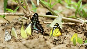 Colorful butterflies. On the ground Stock Images