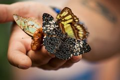 Colorful butterflies in hand in a tropical green hou. Closeup of colorful butterflies in hand in a tropical green house stock photos