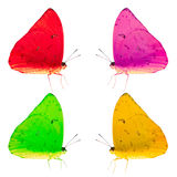 Colorful Butterflies Isolated. Four colorized butterflies presented in a geometric pattern, isolated against a white background Royalty Free Stock Image
