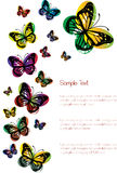 Colorful butterflies isolated on white Stock Image