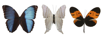 Colorful Butterflies Over A White Background. Royalty Free Stock Images