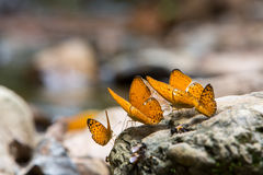 Colorful butterflies Stock Images