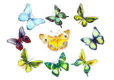 Colorful Butterflies Set. Hand painted  Watercolor Illustration Colorful Butterflies Set Stock Photography