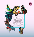 Colorful butterflies vector card. Stock Photography