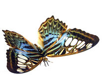 Colorful butterfly. 3D rendering of a colorful butterfly Stock Photo
