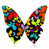 Colorful butterfly Royalty Free Stock Image