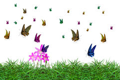 Colorful of butterfly Royalty Free Stock Photo