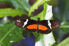 Colorful butterly on plant leaf Royalty Free Stock Photography