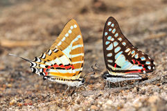 Colorful butterfly stock photo