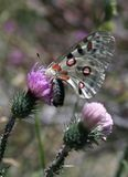 Colorful butterfly. On flower Stock Image