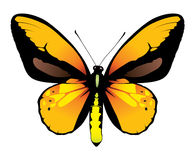 Colorful butterfly. Illustration of colorful yellow butterfly, isolated on white background Royalty Free Stock Photography