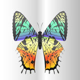 Colorful butterfly with abstract decorative pattern summer free fly present silhouette and beauty nature spring insect Royalty Free Stock Photography