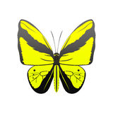 Colorful butterfly with abstract decorative pattern summer free fly present silhouette and beauty nature spring insect Stock Photos