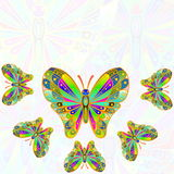 Colorful butterfly as background  with text copy space Royalty Free Stock Photo