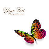 Colorful butterfly background. Stock Image