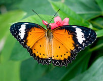 Colorful of butterfly Stock Images