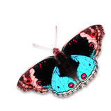 Colorful butterfly Stock Photography