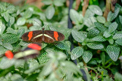 Colorful Butterfly. Beautiful and colorful butterfly sitting on the leaves Royalty Free Stock Images