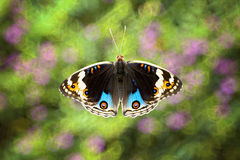 Colorful Butterfly with Blurry Background. Is perching on the branch Royalty Free Stock Photos