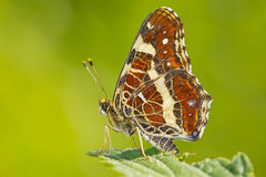 Colorful butterfly closeup over blurred background Royalty Free Stock Photos