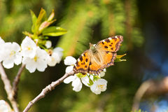 Colorful butterfly on a flower. Royalty Free Stock Photos