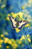 Colorful butterfly on flower,close up. Close up of colorful butterfly on yellow flower,shot in the meadow stock images