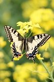 Colorful butterfly on flower,close up Stock Photo