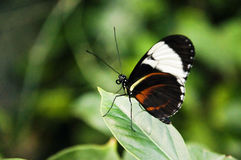 Colorful butterfly on green leaf Royalty Free Stock Images