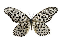 Colorful butterfly isolated on white Stock Photo