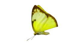 Colorful butterfly isolated on white Royalty Free Stock Photography
