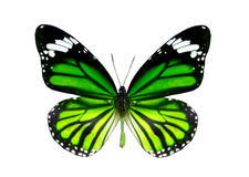 Colorful butterfly isolated on white Royalty Free Stock Images