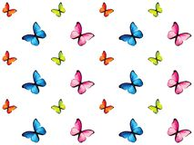 Colorful butterfly isolated on white background Stock Images