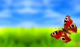 Colorful butterfly with ladybug Stock Photos