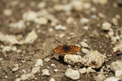Colorful butterfly laid on top of flower. An insect with two pairs of large wings that are covered with tiny scales, usually brightly colored, and typically stock photo