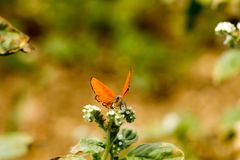 Colorful butterfly laid on top of flower. An insect with two pairs of large wings that are covered with tiny scales, usually brightly colored, and typically stock images