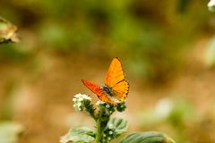 Colorful butterfly laid on top of flower. An insect with two pairs of large wings that are covered with tiny scales, usually brightly colored, and typically stock photos