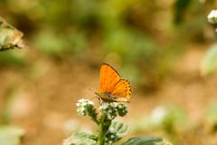 Colorful butterfly laid on top of flower. An insect with two pairs of large wings that are covered with tiny scales, usually brightly colored, and typically stock image
