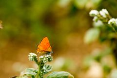 Colorful butterfly laid on top of flower. An insect with two pairs of large wings that are covered with tiny scales, usually brightly colored, and typically royalty free stock images