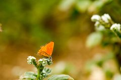Colorful butterfly laid on top of flower. stock photography