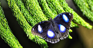 A Colorful Butterfly Royalty Free Stock Photos