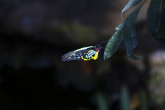 Colorful butterfly on leaf Royalty Free Stock Images