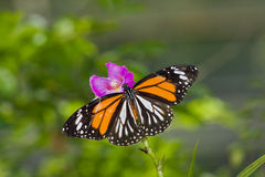 A colorful butterfly on an orchid flower Stock Photo