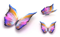 Colorful butterfly over white Royalty Free Stock Images