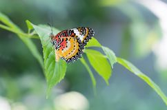 Colorful butterfly parked on the flower stalk. In the sunny morning in the garden royalty free stock image