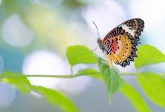 Colorful butterfly parked on the flower stalk. In the sunny morning in the garden stock photo