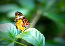 Colorful butterfly parked on the flower stalk. In the sunny morning in the garden royalty free stock photos